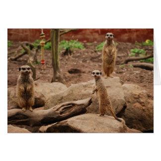 meerkats カード