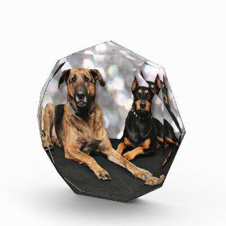 Megyanのドーベルマン犬-バークレーのマスティフX 表彰盾