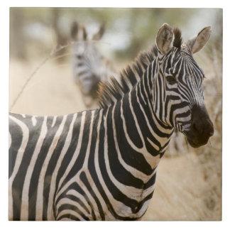 Meruの国立公園のシマウマ、ケニヤ タイル