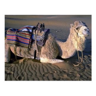 Merzouga、モロッコの近くのサハラ砂漠砂漠 ポストカード
