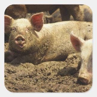 MO: Ste Genevieveの養豚場 スクエアシール