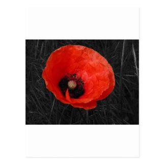 Mohnblumeの赤いケシの写真Foto ポストカード
