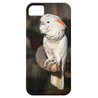 Moluccanオカメインコの電話箱 iPhone SE/5/5s ケース