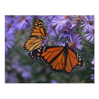 Monarch Butterfly ポストカード