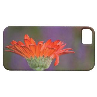 MonetのiPhone 5の場合のためのデイジー iPhone SE/5/5s ケース
