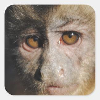 Monkipoe猿- Capuchin スクエアシール