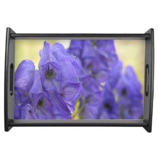 Monkshoodの紫色によってはトレイが開花します トレー