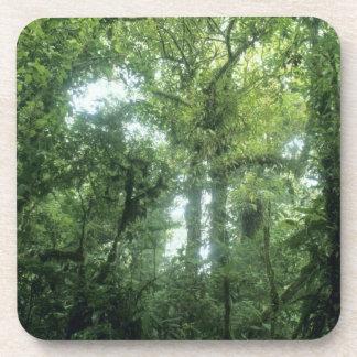 Monteverdeの雲の森林、コスタリカ。 コースター