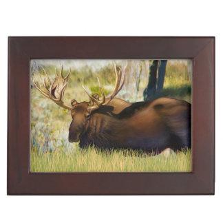 Moose Bull Teton王 ジュエリーボックス
