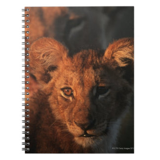 Moremiの野性生物の予備、ボツワナ2 ノートブック