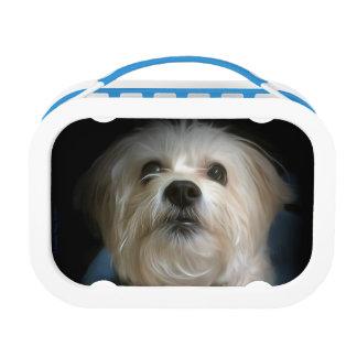 Morkieの小犬愛かわいいランチボックス ランチボックス
