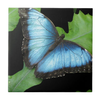 Morphoの青い蝶 タイル