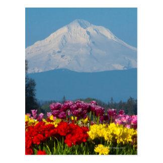 Mtのフード、オレゴンおよびチューリップの圧縮された眺め ポストカード