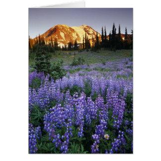 Mt.アダムスおよび副高山草原上の日没 カード