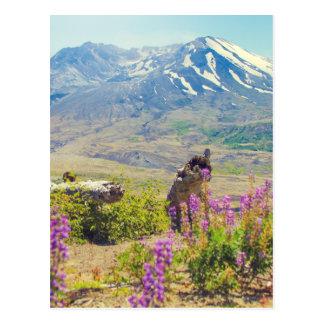 Mt.セントヘレンズ ポストカード
