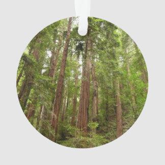 Muirの森の国有記念物のレッドウッドまで オーナメント