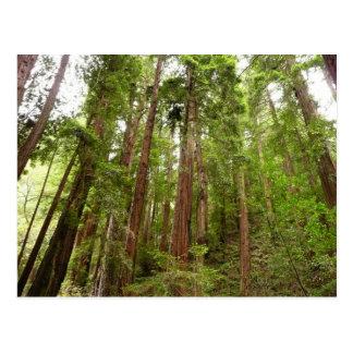 Muirの森の国有記念物のレッドウッドまで ポストカード