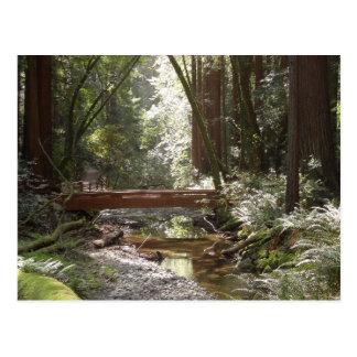 Muirの森橋II ポストカード