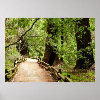 Muirの森道IIの自然の写真撮影 ポスター