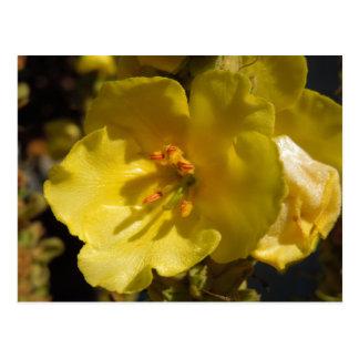 Mulleinのマクロ黄色い花 ポストカード