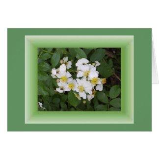 Multifloralのバラ カード
