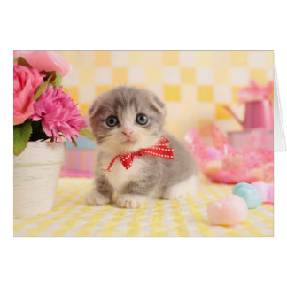 Munchkinの子ネコ カード