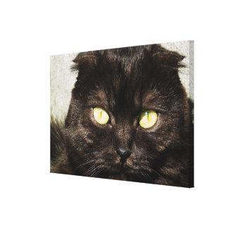 Munchkinの若い子ネコの顔 キャンバスプリント