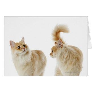 Munchkin猫 カード
