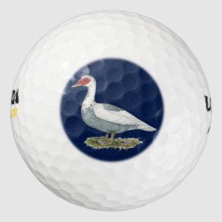 Muscovyの青い雑色のアヒル ゴルフボール