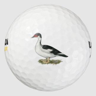 Muscovyの黒い雑色のアヒル ゴルフボール