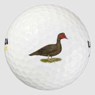 Muscovyドレークチョコレート ゴルフボール