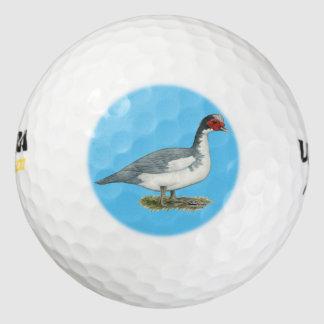 Muscovy青い雑色のドレーク ゴルフボール