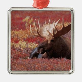 N.A.、米国、アラスカのDenaliの国立公園、Bull メタルオーナメント