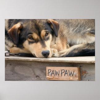 N.A.、米国、アラスカ。 2時のハスキーなそり犬 ポスター