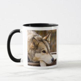 N.A.、米国、アラスカ。 3時のハスキーなそり犬 マグカップ