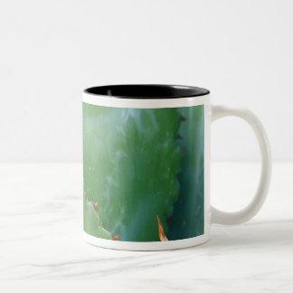 N.A.、米国、アリゾナ、チューソンのソノラの砂漠 ツートーンマグカップ