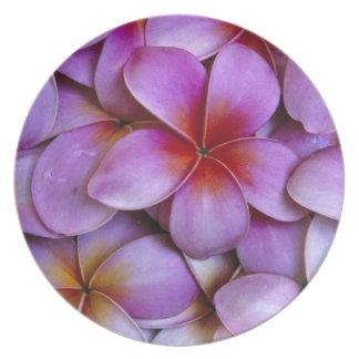 N.A.、米国、マウイ、ハワイ。 ピンクのプルメリアの花 プレート