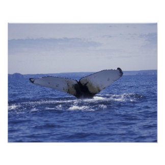 NA、カナダ、ニューファウンドランドの三位一体湾。 Humpback ポスター