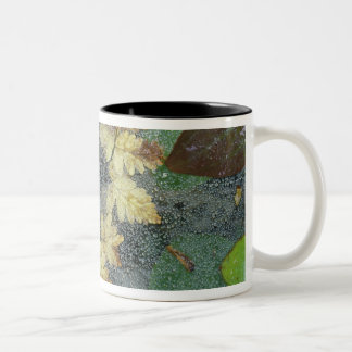 NA、米国、アラスカのnancy湖。 spiderwebの露 ツートーンマグカップ