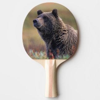 NA、米国、アラスカ、Denali NPの灰色グマ 卓球ラケット
