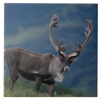 NA、米国、アラスカ、Denali NPのBullのカリブー2 タイル