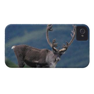 NA、米国、アラスカ、Denali NPのBullのカリブー2 Case-Mate iPhone 4 ケース