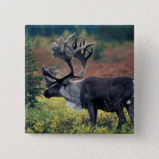 NA、米国、アラスカ、Denali NPのBullのカリブー3 5.1cm 正方形バッジ