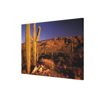 NA、米国、アリゾナのサグアロの国有記念物、 キャンバスプリント
