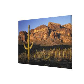 NA、米国、アリゾナ。 オルガン管のサボテンの国民 キャンバスプリント