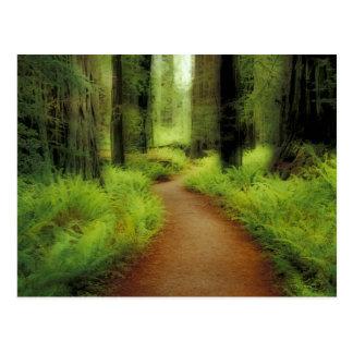 NA、米国、カリフォルニアのJedediahスミスのレッドウッド ポストカード