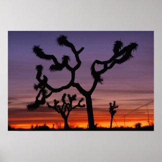 NA、米国、カリフォルニア。 ジョシュアツリーの国民 ポスター