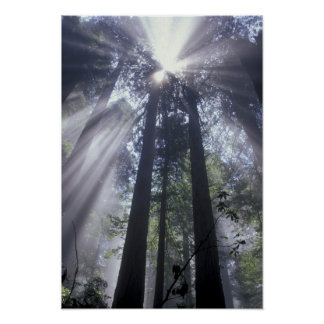 NA、米国、カリフォルニア。 Del Norte Coastの国家 ポスター
