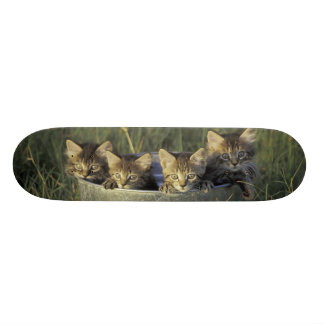 NA、米国、フロリダ、田園フロリダ。 8週古い オリジナルスケートボード