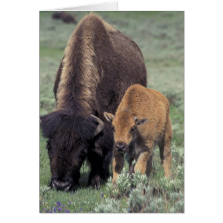 NA、米国、ワイオミングのイエローストーン国立公園 カード